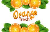 Naranjas sobre el fondo blanco — Vector de stock