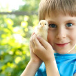 Boy cute hugs chiken in hand nature summer outdoor — Stock Photo