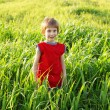 Stock Photo: Boy happy on green wheat field