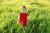 Boy happy on green wheat field — Stock Photo