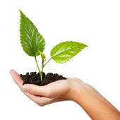 Tree green fresh in female hand isolated — Stock Photo