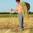 Stock Photo: Peasant cocks hay