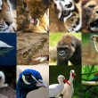 Wildlife collage — Stock Photo #12079559
