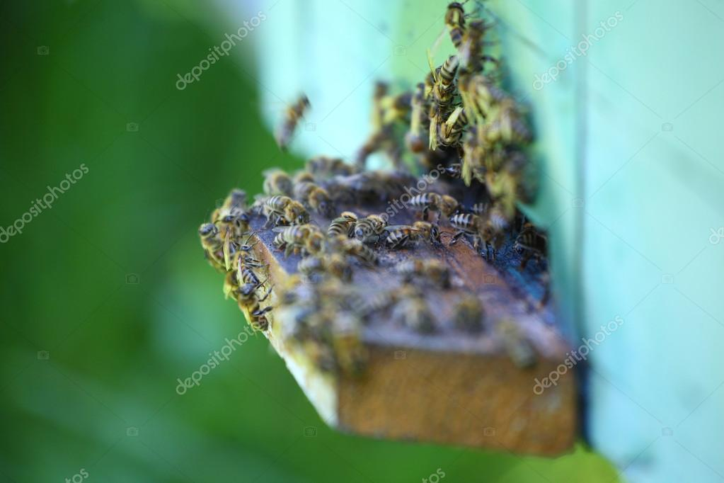 Wooden beehive and working bees — Stok fotoğraf #12079554