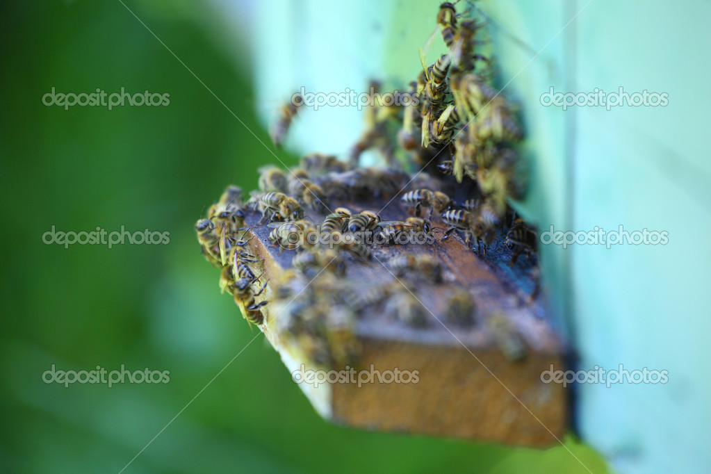 Wooden beehive and working bees  Foto Stock #12079554