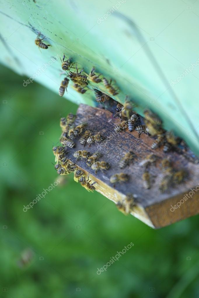 Wooden beehive and working bees — Stock Photo #12079555