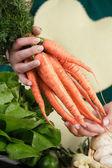 świeże marchewki — Zdjęcie stockowe
