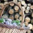 Plums in a basket — Stockfoto