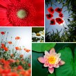 Flower collage — Stock Photo #37460343