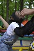 Monkey — Foto Stock