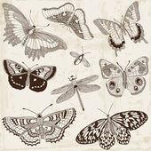 向量组: 书法蝴蝶的设计元素和页面装饰 — 图库矢量图片