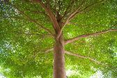 Under the tree. — Stock Photo