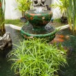 Pond in the garden. - Stock Photo