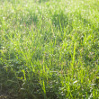 Grass in the field. - Stock Photo