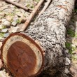 Stock Photo: Dry logs.