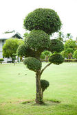 Tree decorations. — Stock Photo