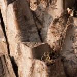 Stem of the tree. — Stock Photo
