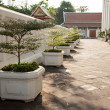 Stock Photo: Potted plants along the pathway.