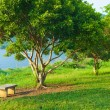 Bench under a tree. - Stock Photo
