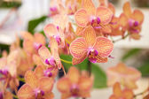 Orchids. — Stock Photo