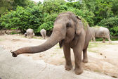 Elephant is asking for food. — Stock Photo