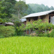 Home adjacent rice fields — Stock Photo #37806807