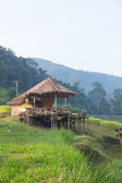 House and rice fields — Stockfoto
