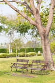 Benches on the lawn — Stock Photo