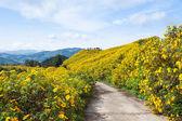 花のフィールド — ストック写真