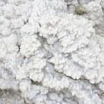 osadów mineralnych wykonane z soli, skały i wody w najniższym punkcie ziemi, Morze Martwe — Zdjęcie stockowe #20381297