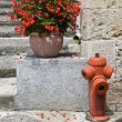 Red geraniums and red fire hydrant — Stock Photo #28884907