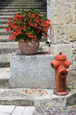 Red geraniums and red fire hydrant — Stock Photo