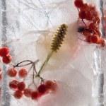 zmrazené spathiphyllum floribundum — Stock fotografie