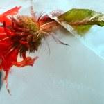 röd blomma i is — Stockfoto