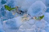 Frozen cherry flower — Stock Photo