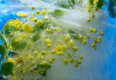 Frozen barbery flower — Stock Photo