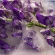 Background of aconite flower frozen in ice — Stock Photo
