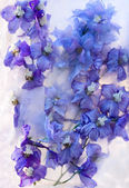 Frozen blue delphinium flower — Foto Stock