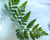 Background of ferns leaf frozen in ice — Stock Photo