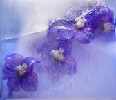 Frozen blue delphinium flower — Stock Photo