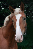 Portrait of young horse on green background — Stock Photo