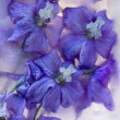 Foto Stock: Flowers of delphinium frozen in ice, art winter background.