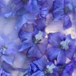 Background of delphinium flower frozen in ice — Zdjęcie stockowe