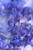 Background of delphinium flower frozen in ice — Stock Photo