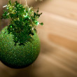 Christmas green ball with twig of fir — Stock Photo