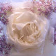 Background of rosa flower frozen in ice — Stock Photo