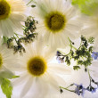 Background of camomile flower frozen in ice — Stock Photo