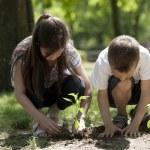 Children planting — Stock Photo #12258490