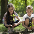 Children planting — Stock Photo