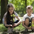 Stock Photo: Children planting